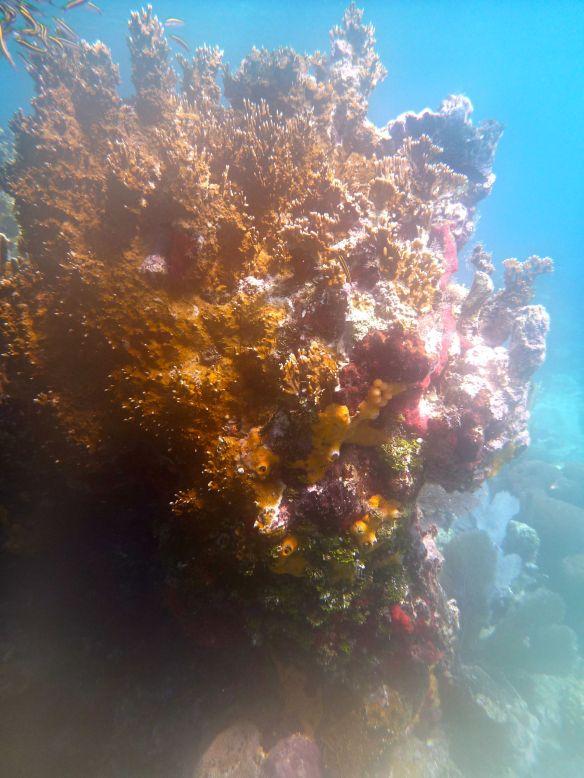 enhanced coral